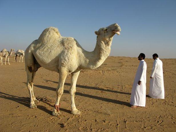saudi-arabia-95500__480