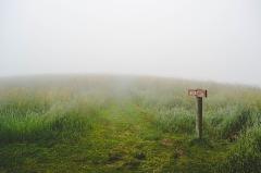 grass-1209945_640