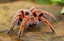 spider-2740997_640