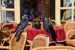 raven-1346323_640