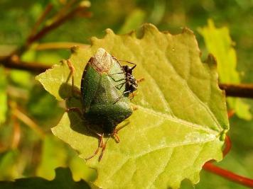 leaf-3124214_640
