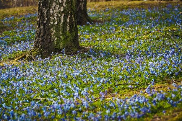bluebell-3248080_1280