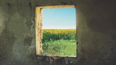 sunflower-868119_640