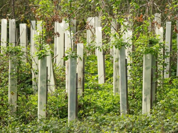 trees-2206090_1280