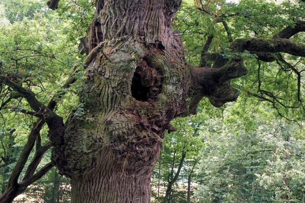 oak-1544921_1280