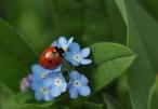 ladybug-308215_640