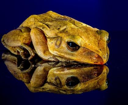 frog-204431_640