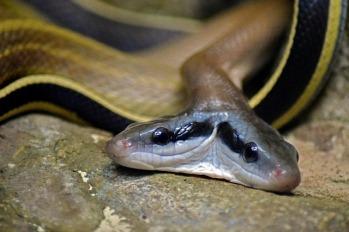 snake-2315848_640