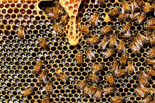 beehive-337695_640