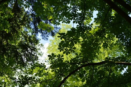 canopy-3388987_640