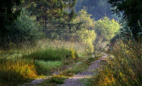 forest-4442221_1280