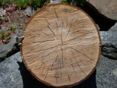 oak-18557_640