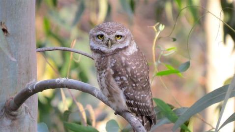 owl-1484782_640