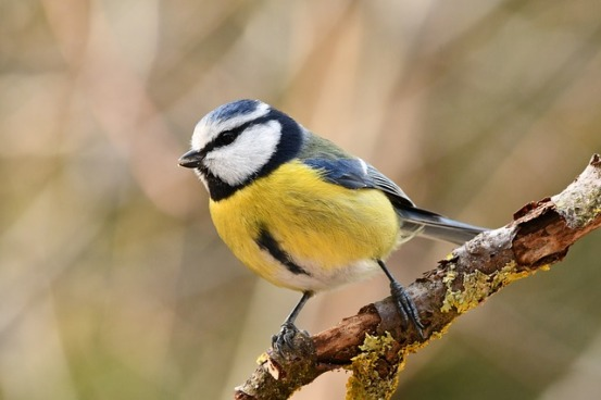 bird-4058195_640