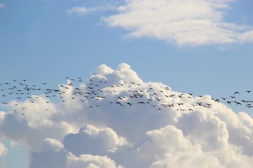 bird-migration-4023947_640