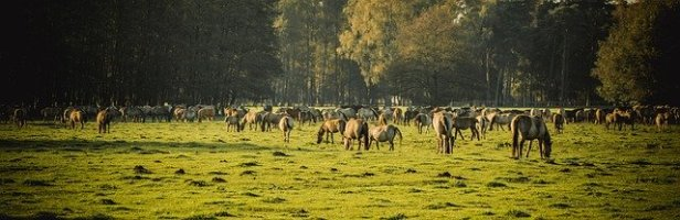 brumby-horses-2976566_640