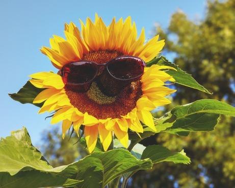 glasses-3477664_640