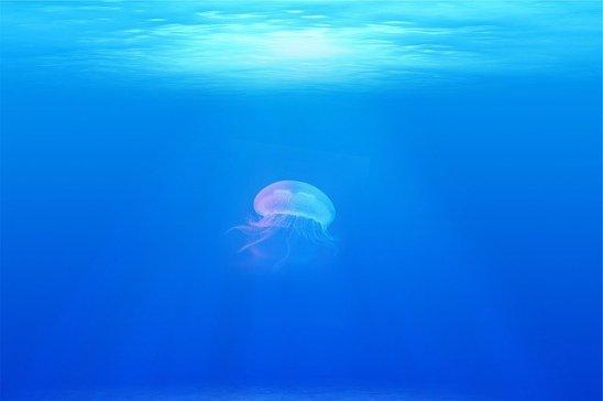 jellyfish-698521_640