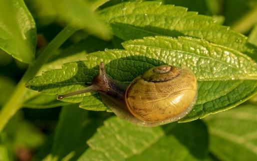 snail-3393196_640